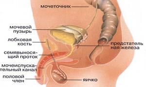 Симптомы болезней мочевой системы