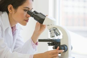Бактерия в мазке у мужчин