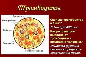 Сколько тромбоцитов содержится в крови здорового человека