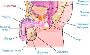 Заболевание простата и ее лечение