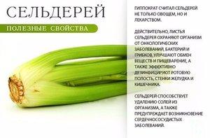 Польза сельдерея - перечень витаминов и минералов