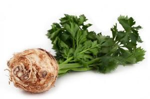 Сельдерей - особенности овоща