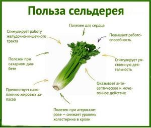 На рисунке показаны полезные вещества, которые есть в сельдерее