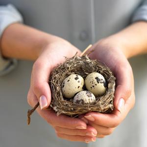 Чем вредны перепелинные яйца
