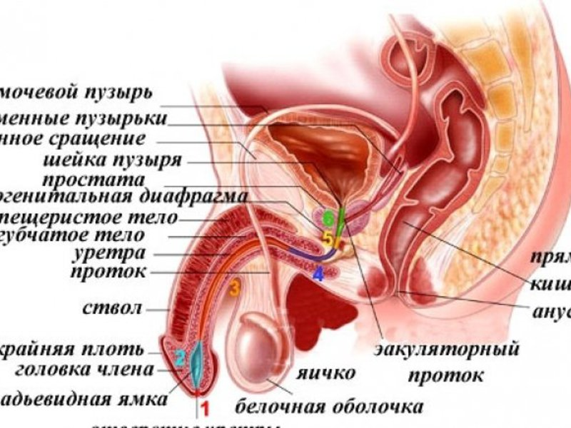 Симптомы простатита у мужчин народное лечение